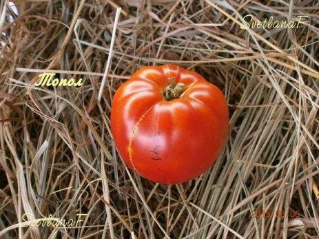 томат Топол