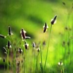Auch Privathaushalte können zur Verringerung der Treibhausgase beitragen