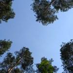 Ein Wald voll mit Treibstoff