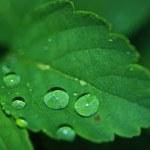 Ein Blatt wandelt Sonnenlicht in flüssigen Kraftstoff um