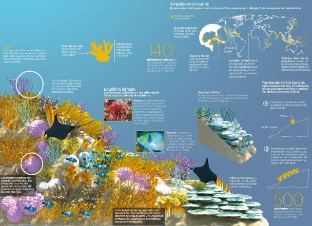 infografia corales