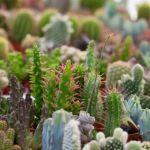 plantas desierto