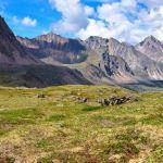 bioma tundra