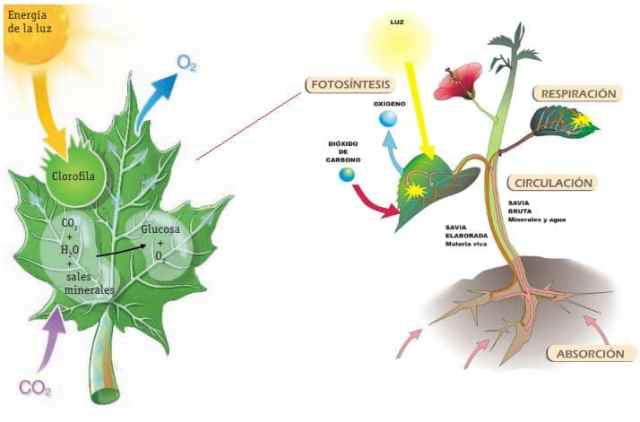 ejemplo proceso nutrición autótrofa