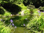 (37.875, -122.235) The Asian garden example in UC Berkeley's Botanical Gardens gave us ideas for landscaping in and around the creek.