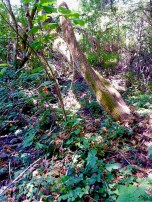 (37.872, -122.243) Fortunately, we managed not to get poison oak in all of this nature.