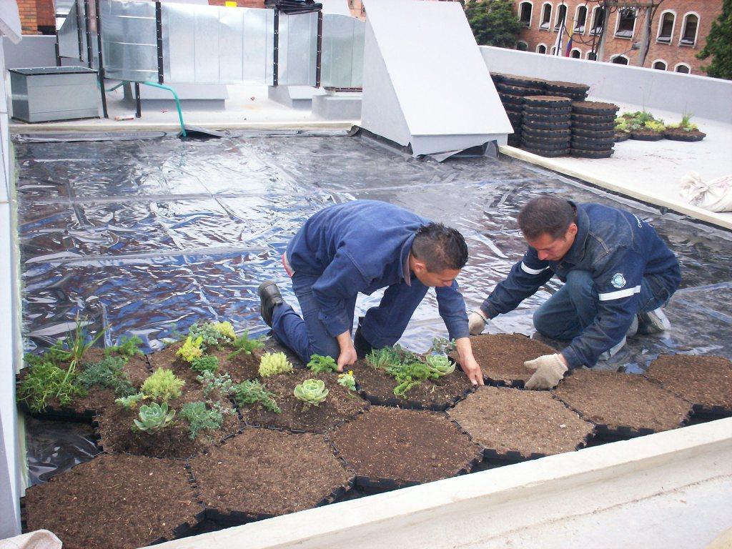 Techo Verde, Green Roof