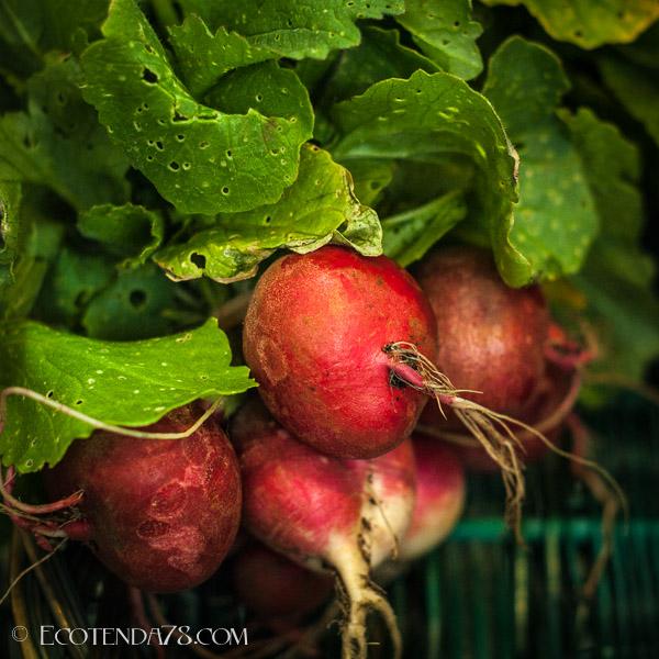 5 Motivos para Consumir Produtos Ecolóxicos