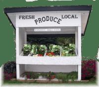 Fresh Local Lettuce - ecotone farm, Fellsmere, FL
