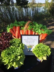 Ecotone Farm Donates To Treasure Coast Food Bank