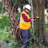 GPS-tree-inventory-Environmental-ConsutingVeroBeach
