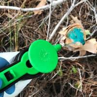 Garlon application to stump Environmental Consulting, Vero Beach