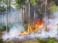 Prescribed-burn-Environmental-Consulting-VeroBeach