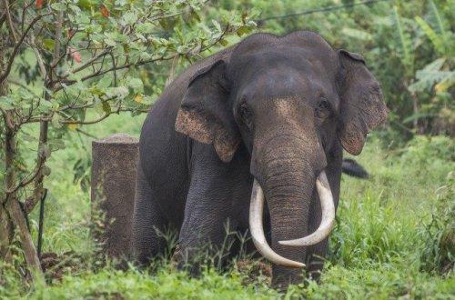 スリランカ 象