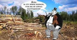 Приватизируй это: новый законопроект о пользовании лесами