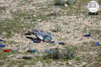 Muerta en el campo de tiro