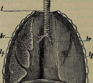 Respiration diaphragmatique : un chemin vers la sérénité