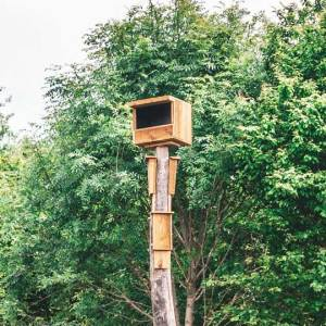 Faunapaal met torvalkbak en vleermuizennestkast, gemaakt uit lariks. Deze nestkast is op maat gemaakt voor de torenvalk en vleermuizen.