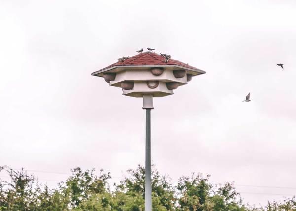 zwaluwtil in vlaanderen, België met kolonie huiszwaluwen op het dak en in nesten