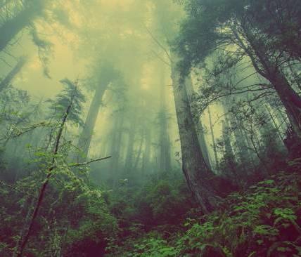 Dia Mundial Proteccion de la Naturaleza