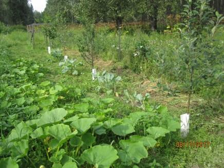 squash, cabbage & fruit trees