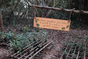 Sadhana_Forest_Auroville_India-86