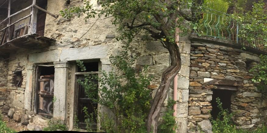 Zonca-Overgrown-Ruins