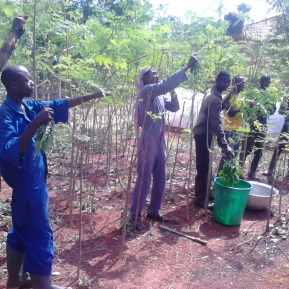 Ghana Permaculture Institute