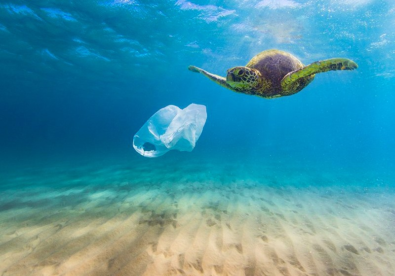 Practical Steps to Solve the Plastic Pollution Crisis (2)