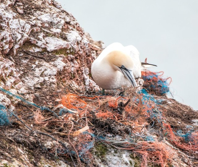 Top 10 Items Collected At Ocean Conservancys International Coastal Cleanup All Made Of Plastic