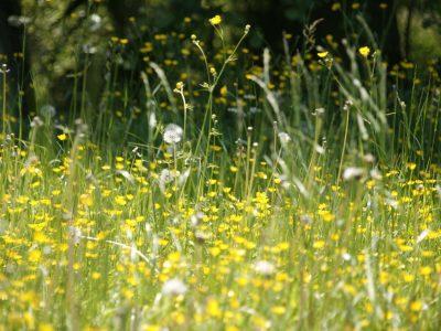 Tips tegen hooikoorts, de symptomen en wat is hooikoorts