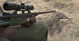 AFRICAN BILLIONAIRE SLAUGHTERS ELEPHANTS