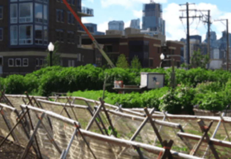 HOW URBAN AGRICULTURE CAN IMPROVE FOOD SECURITY IN U.S. CITIES