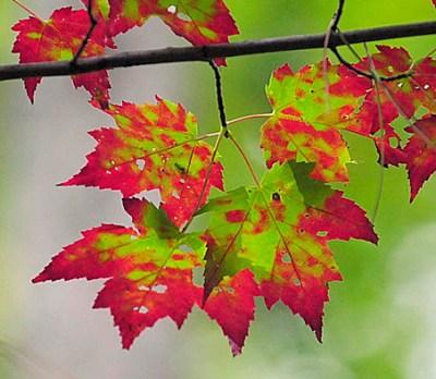 Five best U.S. destination for fall foilage colors