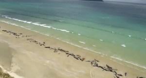 νεκρά δελφίνια