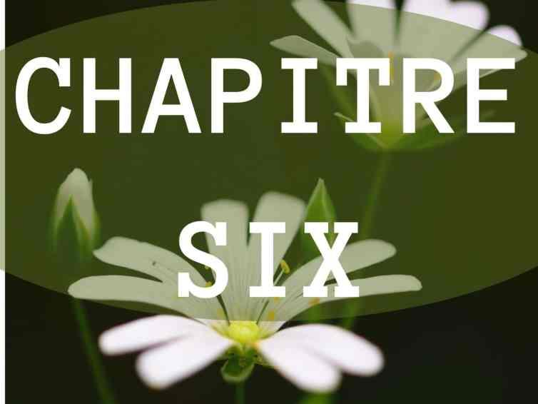 🎧📖[Roman] Toute la lumière – chapitre 6