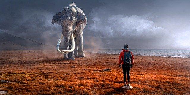 Découpez l'éléphant. Réduisez vos objectifs pour qu'ils soient plus digestes.