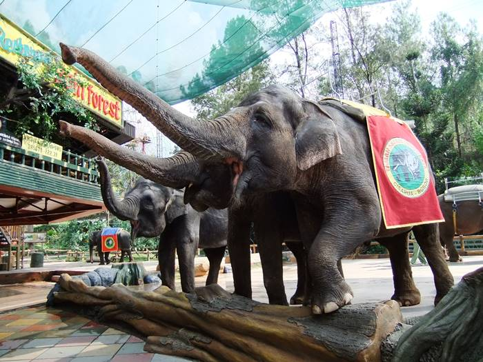 Wisata Sekitar Jakarta - Puncak