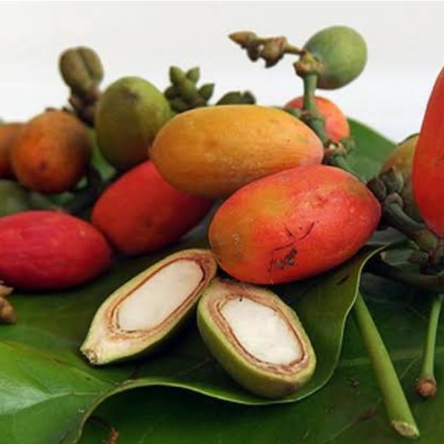 Jual BUAH MELINJO - Pasar Rebo - rosogrosir | Tokopedia