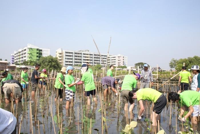 Peringati Hari Lingkungan Hidup Sedunia, Tim Tokopedia Tanam Mangrove di Pesisir Pantai Marunda