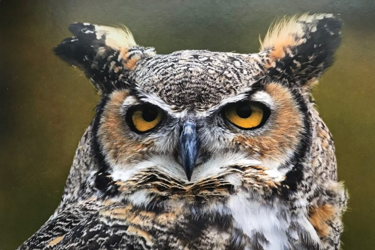 image of a very not-amused-looking owl