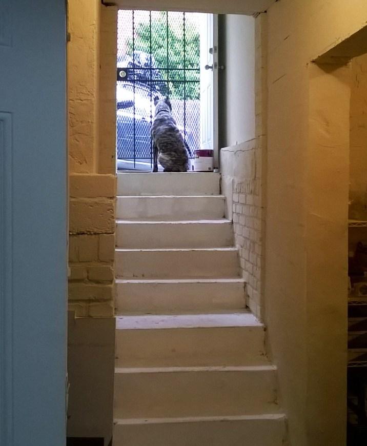 Ruca, guard dog