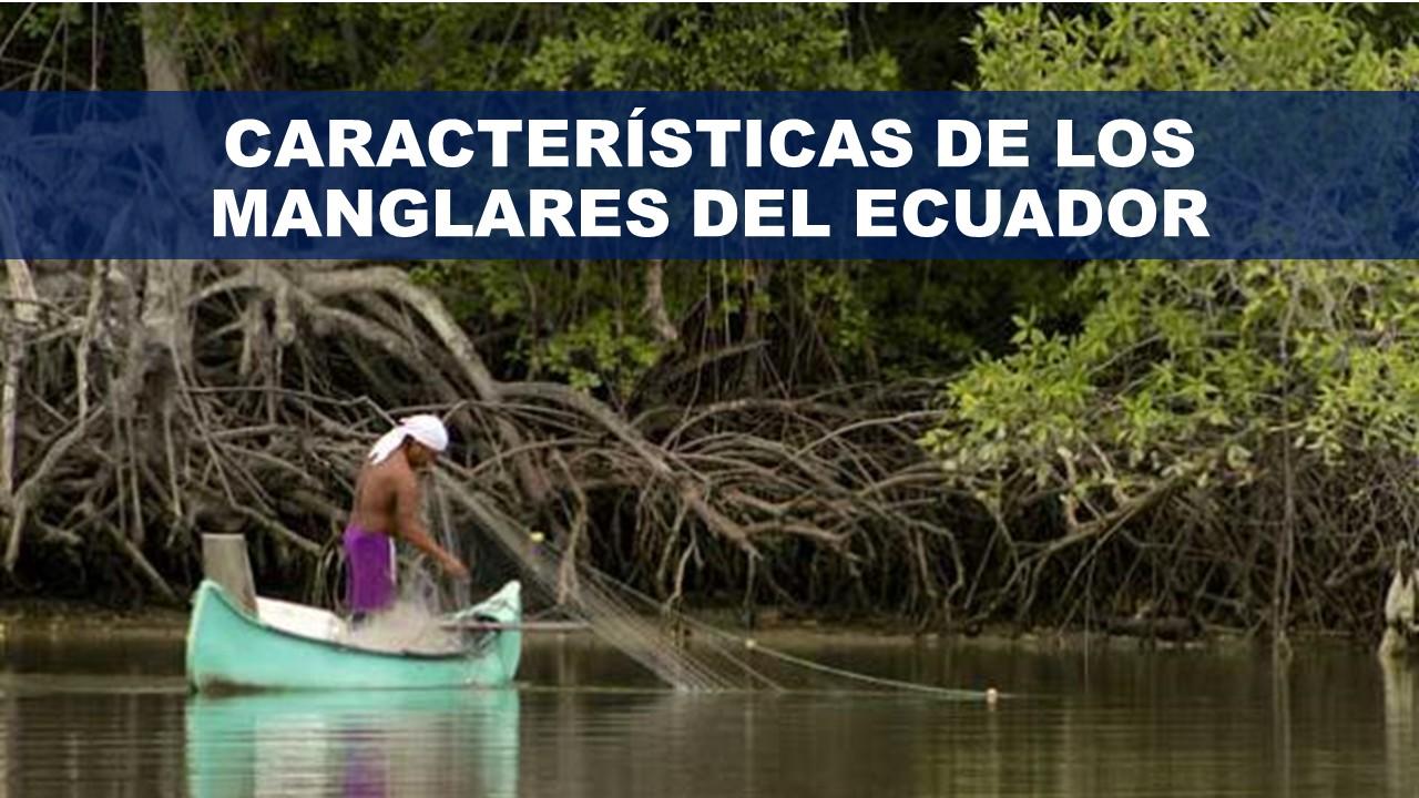 Características de los Manglares del Ecuador