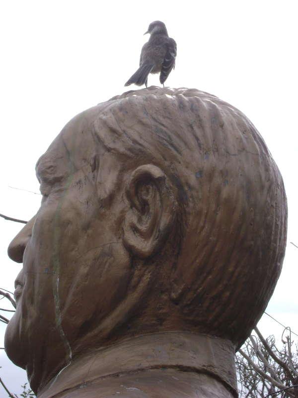 Pinzón encima de un monumento en Puerto Ayora.