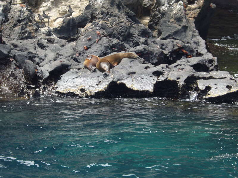 Lobos marinos y iguanas marinas.