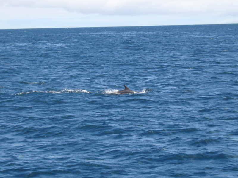 Delfines en Galápagos.