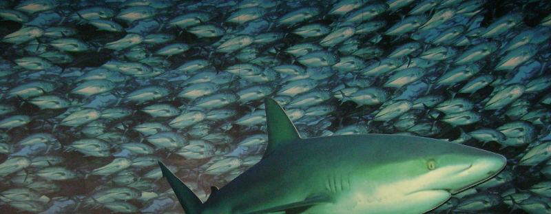 Imagen de un tiburón y peces nadando en una corriente marina.
