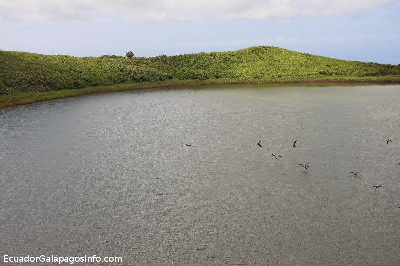 Fragatas volando sobre la laguna.