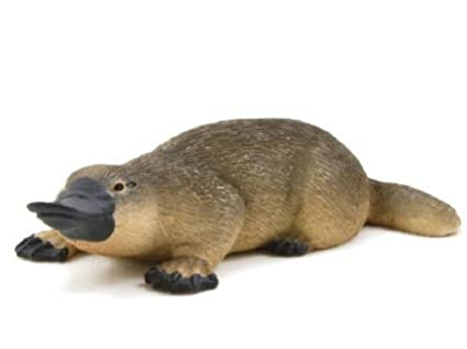 Image result for Duck-billed platypuses images
