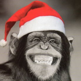 Charity Christmas Cards Monkey In Hat Pack Of 5 Cards
